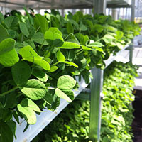 There are now microgreen farms