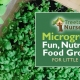 Microgreens: fun, nutritious, food growing for little ones