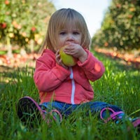 Toddler eating fruit