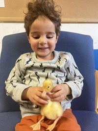 A duckling being cared for by a child at Treetops Nursery