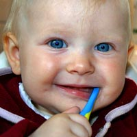 Babies' teeth should be brushed as soon as they first appear through the gums